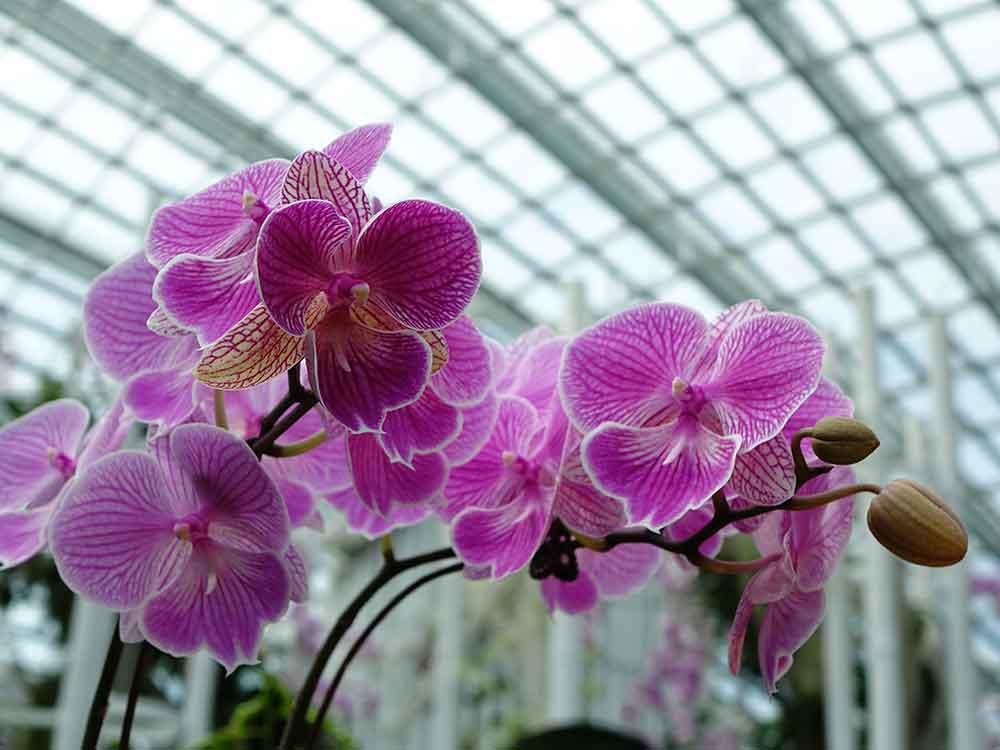 Pflanzenaufzucht Beleuchtung Licht